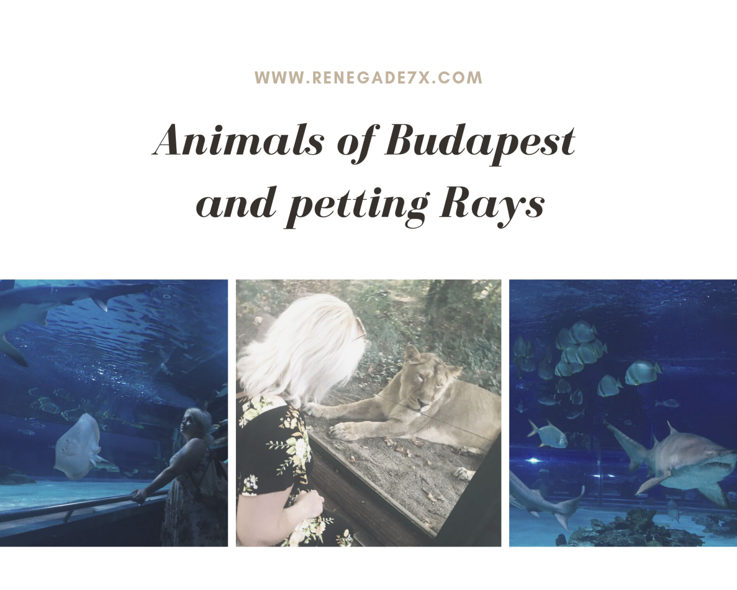 Animals of Budapest and petting Rays